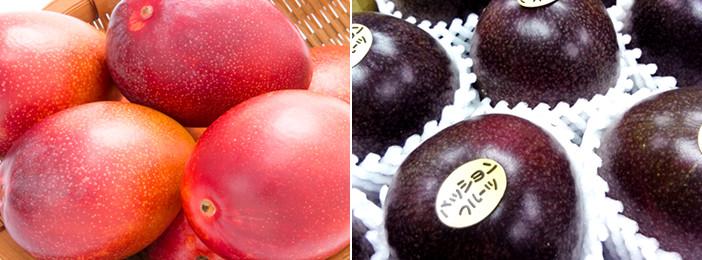 宮古島産のフルーツ